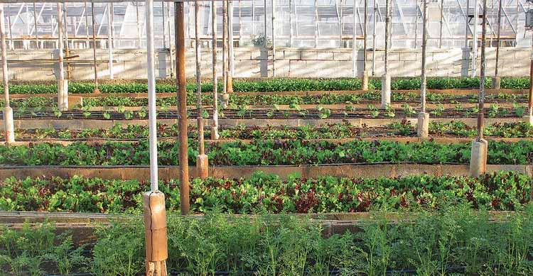 Проект превращает пустующие места в городские огороды в Рорайме. Изображение через CicloVivo