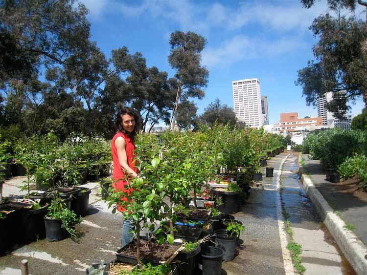 Сан-Франциско принимает закон, снижающий налоги на пустыри с общественными садами. Изображение © cjmartin, через Flickr. Используется под лицензией Creative Commons