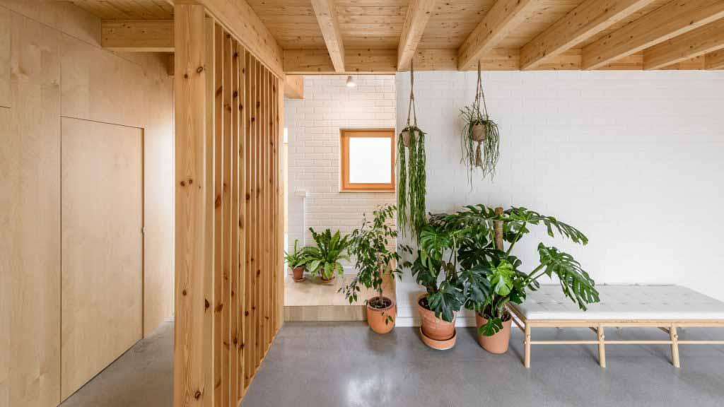 Домашний интерьер с эффектными растениями, которые несут в себе природу