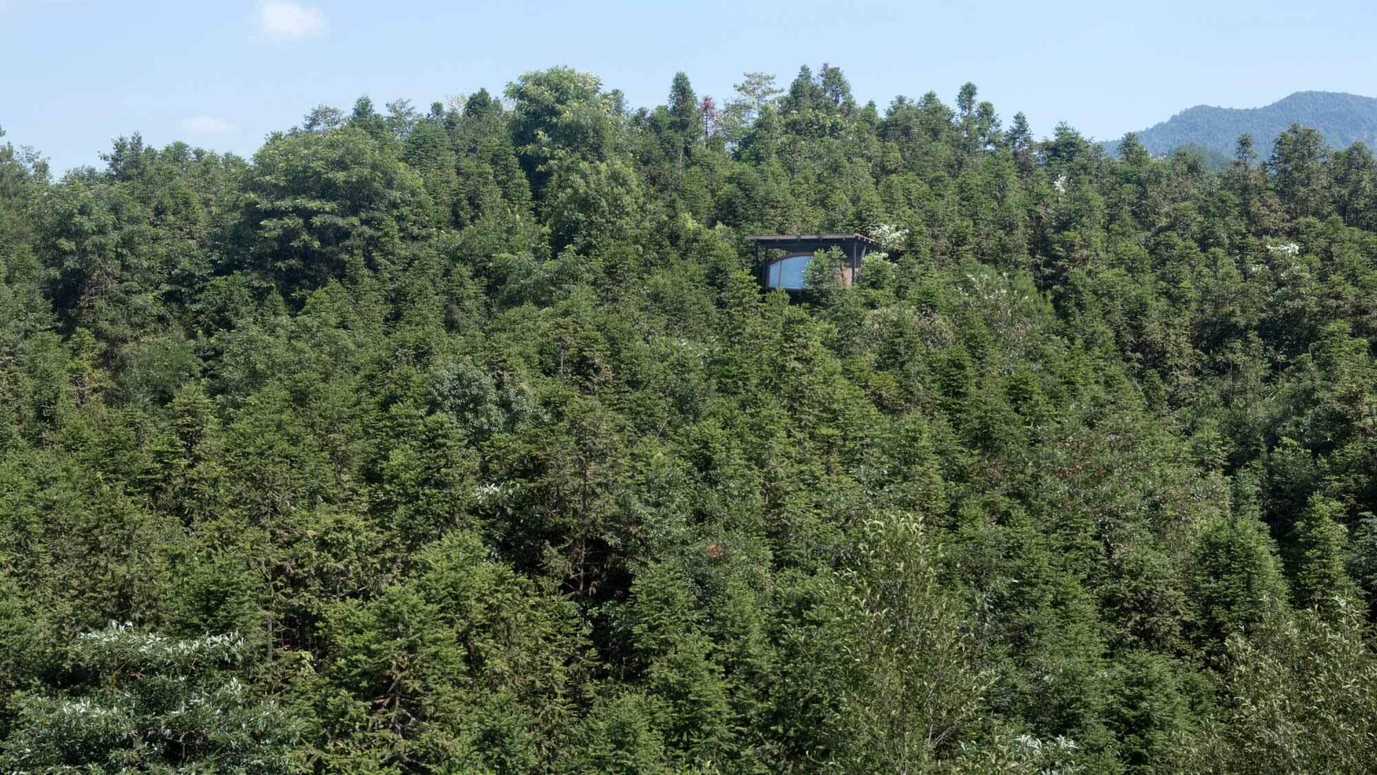 Дом на дереве / генархитекторы |