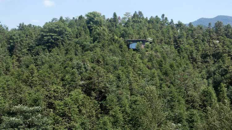 Treehouse / genarchitects, Дом на дереве выше навеса с широким обзором.  Изображение © Боуэн Хоу